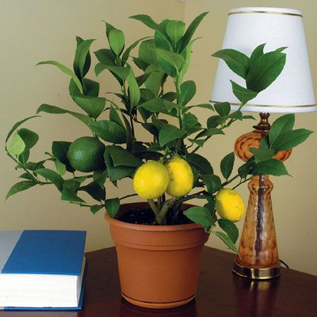 Beau Indoor Plants To Decorate Your Home